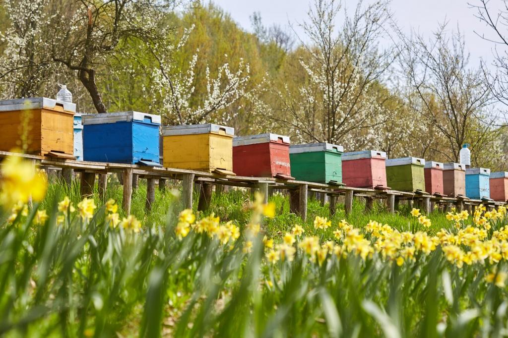 заказе сами картинки пасека пчелы в поле подсолнухов сначала