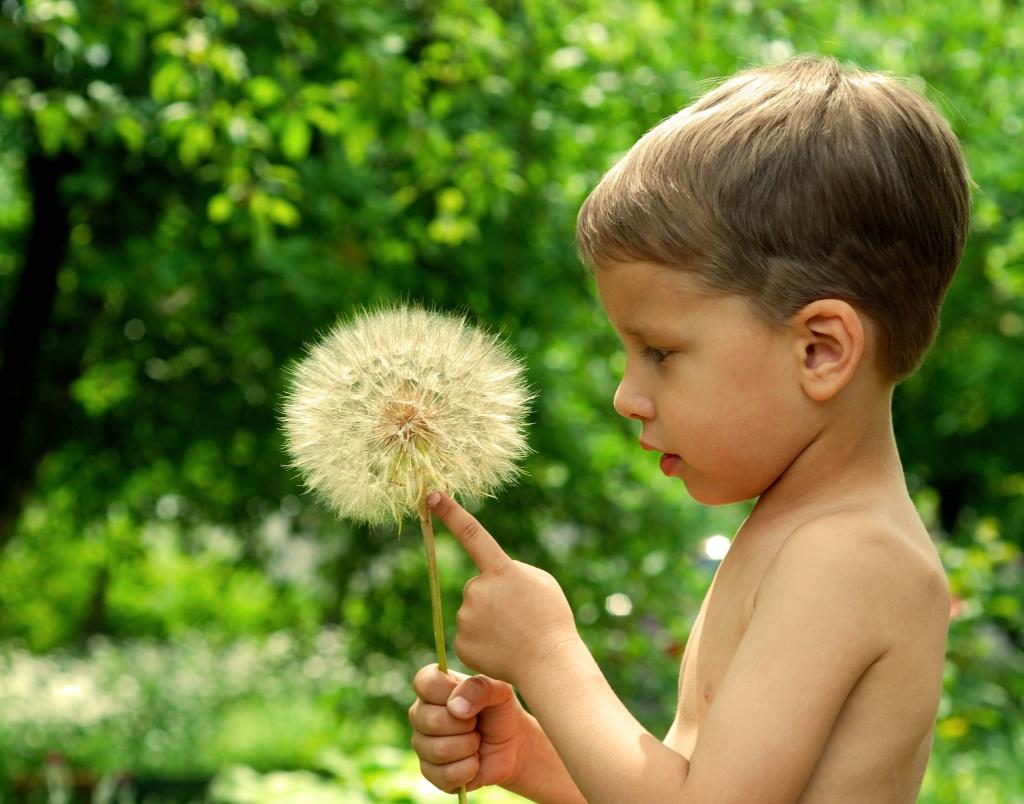 питание при аллергии на пыльцу растений