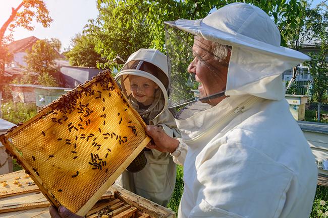 аллергия на мед причины, фото